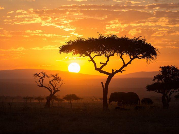 Kenya (Masái Mara)